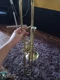 trompeta root cheslovakia - foto