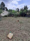 Servicios jardineria desbroce poda tala - foto