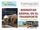 CURSO BIENESTAR ANIMAL - foto
