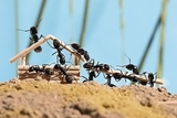 Eliminación de cucarachas jerez y cerc. - foto