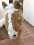 pony de peluche - foto