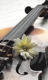 violinista ; jaén - foto