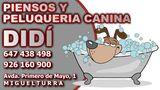 Peluqueria Canina DIDI Miguelturra - foto