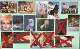 calendarios de animales - foto