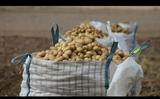 Patatas de Spunta 25kg a 12  a domicilio - foto