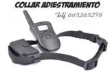 RcMlB - Collares adiestramiento de perro - foto