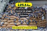 Control de plagas de palomas - foto