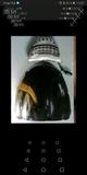 HONDA CBR 900 FIREBLADE - foto