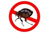 Eliminación de pulgas - foto