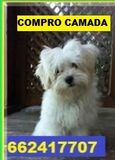 COMPRO CAMADA COMPLETA - foto