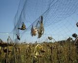 Red proteccion de cultivos - foto