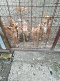 venta de cachorros iniciados - foto