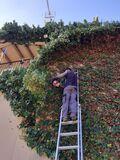 Poda tala desbroce y servicios jardineri - foto