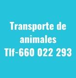 TRANSPORTES DE ANIMALES - foto