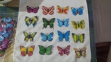 Lote 100 mariposas reales magneticas - foto