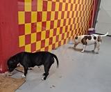 Cuidador de Perros - foto