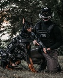 Dog security / seguridad canina - foto