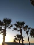 Cortamos hojas de palmeras - foto