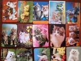 40 calendarios gatitos,perritos... - foto