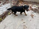 Jadd Terrier - foto