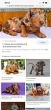 Perro salchicha - foto