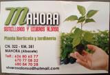 PLANTELES HORTICOLAS - foto