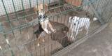 cachorra cruce de beagle - foto
