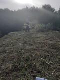 Limpieza parcelas poda tala jardineria  - foto