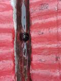 Limpieza de tejados (visita gratuita) - foto
