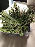3 Plantas Mágicas - foto