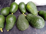 AGUACATES HASS - foto