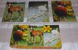 Puzzles Educa - foto