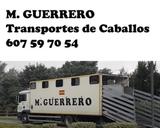 TRANSPORTES DE CABALLOS,  BECERROS,  OVEJA - foto