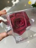 rosas enternas rojas - foto