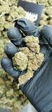 Cogollos de caÑamo,marihuana legal - foto