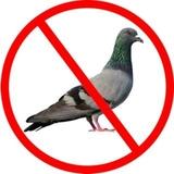 control de plagas y aves. - foto
