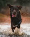 Fotografía de mascotas - foto