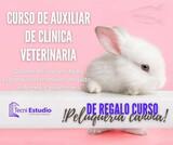 CURSO DE AUXILIAR DE CLÍNICA VETERINARIA - foto