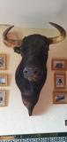 Cabeza de toro disecado - foto