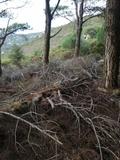 Trabajos forestales - foto
