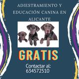 ADIESTRAMIENTO Y EDUCACIÓN CANINA - foto