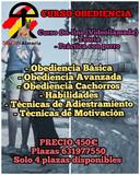 CURSO DE OBEDIENCIA - foto