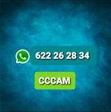 LLAMA 622 26 28 34 CCAM - PREMIUM - foto