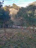Limpieza parcelas poda tala y jardinería - foto
