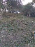 Limpieza parcelas poda tala y jardineria - foto