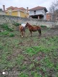 POTROS - foto
