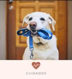 PASEADOR Y CUIDADOR - foto