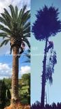 Tala de árboles y palmeras en Asturias - foto