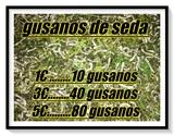 GUSANOS DE SEDA - foto