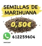 SEMILLAS DE MARIHUANA DESDE 0, 50 - foto